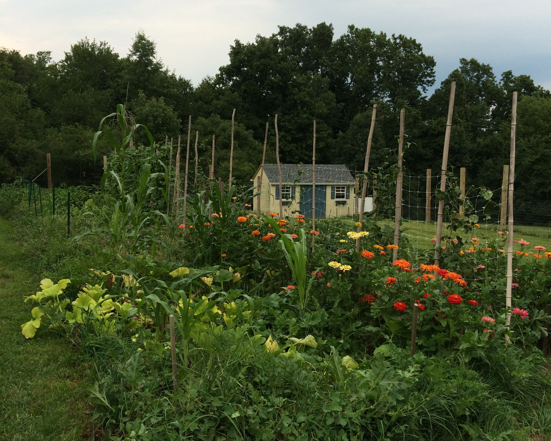 BG current - Community Garden.JPG